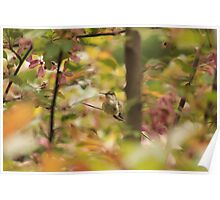 Hummingbird in Blooms Poster