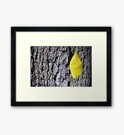 Yellow Leaf on Bark Framed Print
