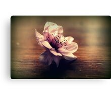 Cherry Blossom On A Table Top Canvas Print