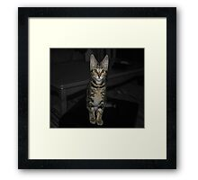George The Kitten Framed Print