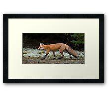 Fox trot  Framed Print