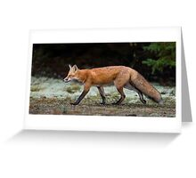 Fox trot  Greeting Card