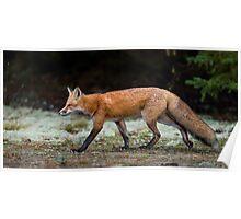 Fox trot  Poster