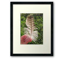 Hawk Feather Framed Print