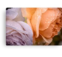 Raindrops on pastel roses Canvas Print
