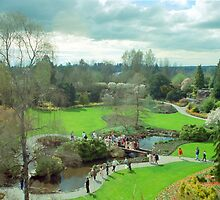 Queen Elizabeth Park in Bloom, Vancouver, BC by Priscilla Turner