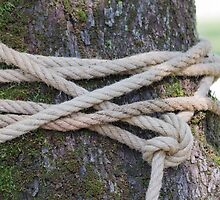rope around the tree by spetenfia