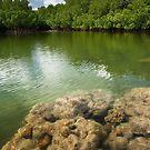 Namwenkau Pool - Pohnpei, Micronesia by Alex Zuccarelli
