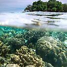 Black Coral Island - Pohnpei, Micronesia by Alex Zuccarelli