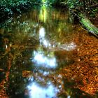 Streaming Light in the Forest by Michael Matthews