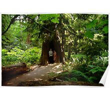 Two Under Tree, Cathedral Grove, 1993 Poster