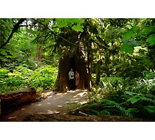 Two Under Tree, Cathedral Grove, 1993 Photographic Print