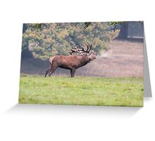 Bellowing Red Deer, Stag Greeting Card