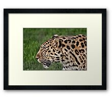 Spotty Framed Print
