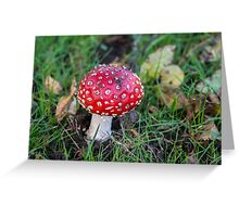 Fly Agaric Greeting Card