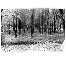 Autumn woods bw Poster