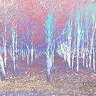 Autumn woods color psycho by borjoz