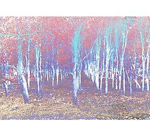 Autumn woods color psycho Photographic Print