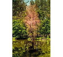 Autumn tree colorful Photographic Print