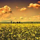summertime by borjoz