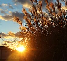 Sunset in the Ornamental Grass by Gilda Axelrod