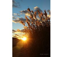 Sunset in the Ornamental Grass Photographic Print