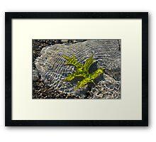 Green Sunshine - a Jade Colored Oak Leaf on the Rocks Framed Print