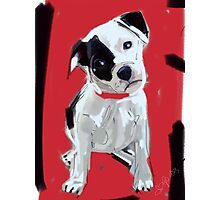 Dog Doggie Red Photographic Print