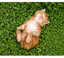 Puppy red cat Photographic Print