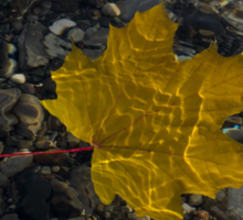 Amber Yellow Sunshine - Maple Leaf and Pebbles Sticker