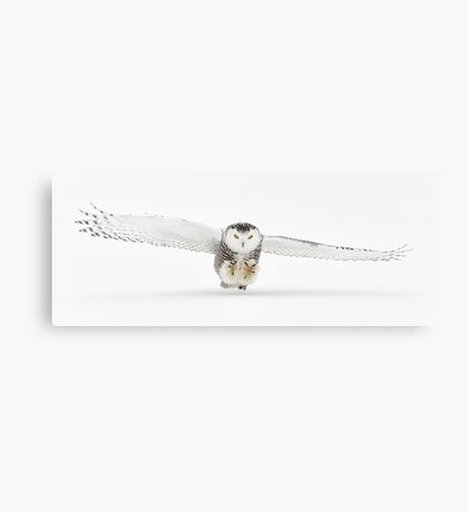 Target in sight... Canvas Print