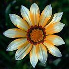 flower by paakojsimpson