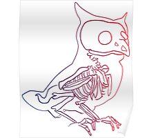 Beautiful Owl Poster