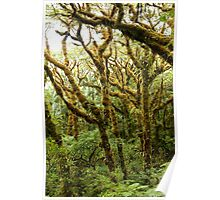 Magical Forest - Pohnpei, Micronesia Poster