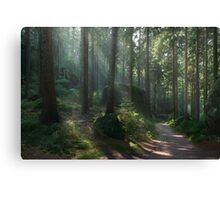 Saxony Forest Canvas Print
