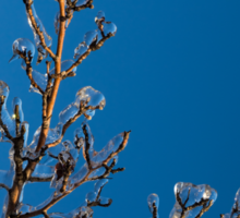 Mother Nature's Christmas Decorations - Gleaming Icy Baubles in Blue Sticker