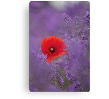 Poppy in Lavender Canvas Print