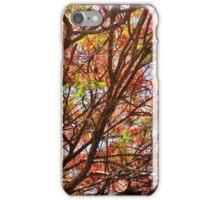 Flamboyant Summer iPhone Case/Skin