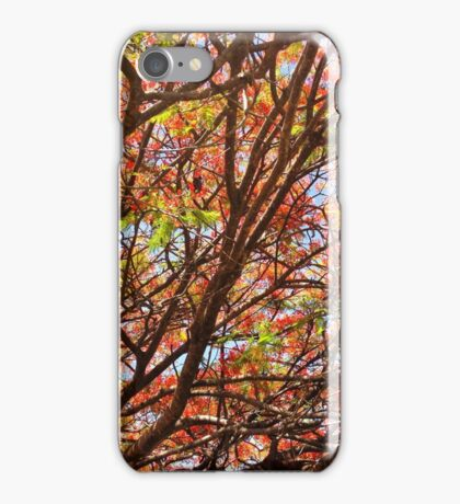 Flamboyant Summer iPhone Case/Skin