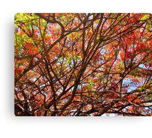 Flamboyant Summer Canvas Print