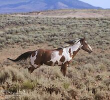 Picasso- iconic stallion by equusferus