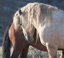 Equus ferus Wild Horse Photography 2015 Stallion Calendar by equusferus