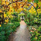 Autumn walkway by Rachael Talibart