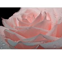 Baby Pink Rose Photographic Print