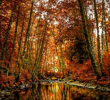 Reflect On Me by Charles & Patricia   Harkins ~ Picture Oregon