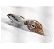 Mountain Hare in Snow (side view) Poster
