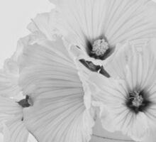 Lavatera Flowers In Tea Cup - Still Life Sticker