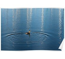 Ripples and Circles – Red-Necked Grebe Poster
