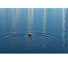 Ripples and Circles – Red-Necked Grebe Photographic Print