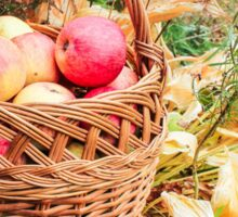 Basket with apples. Sticker